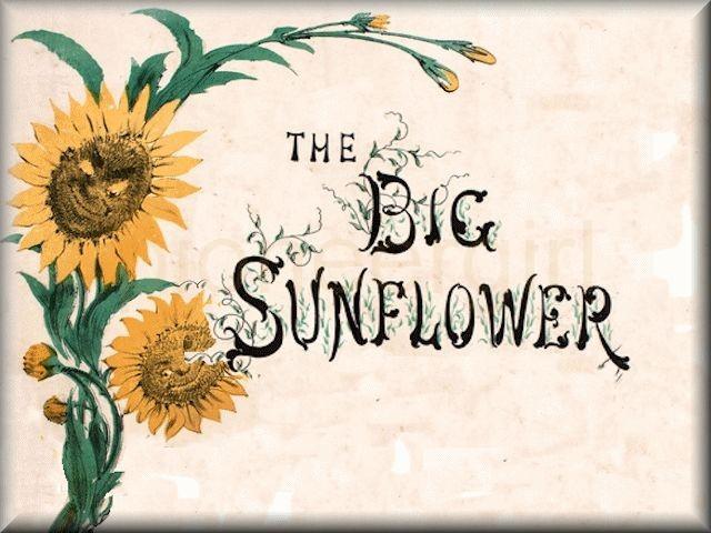 """The Big Sunflower"""