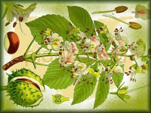 chestnut / horse chestnut